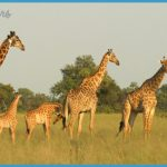 Africa Wildlife Travel Tours_10.jpg