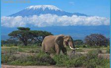 Africa Wildlife Travel Tours_2.jpg