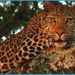Africa Wildlife Travel Tours_5.jpg
