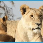 Africa Wildlife Travel Tours_6.jpg