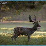 Dehesa Wildlife Travel Destinations _2.jpg