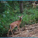 French Wildlife Travels_10.jpg