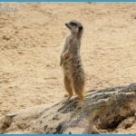 French Wildlife Travels_2.jpg