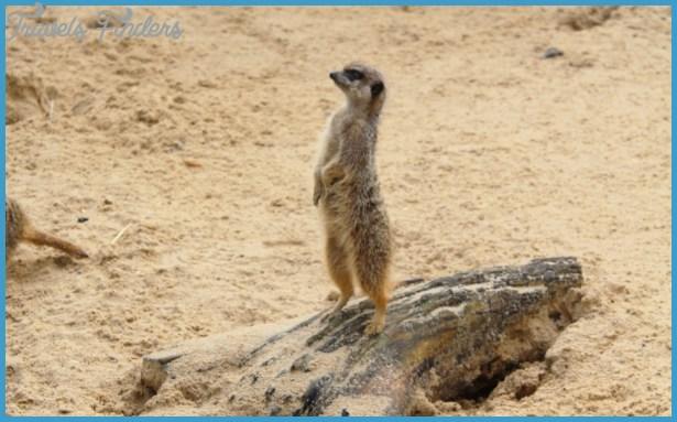 french wildlife travels 2 French Wildlife Travels
