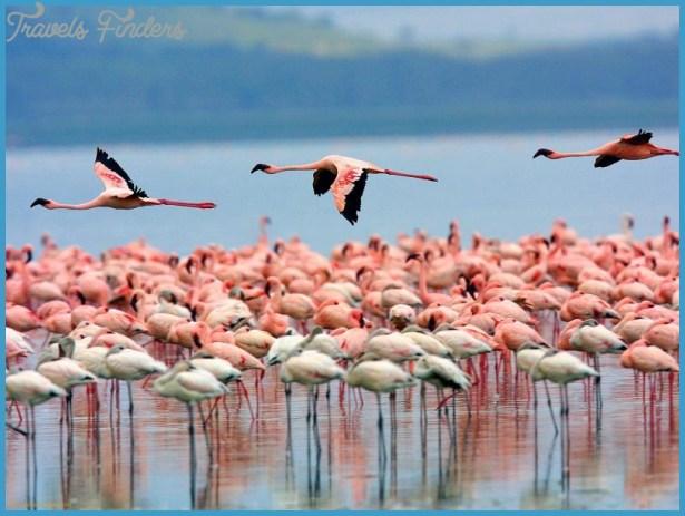 Kenya Luxury Wildlife Travel _1.jpg