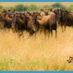 Kenya Luxury Wildlife Travel _12.jpg