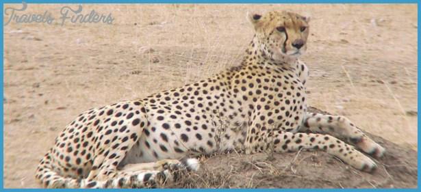 Kenya Luxury Wildlife Travel _16.jpg