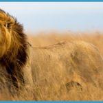 Kenya Luxury Wildlife Travel _17.jpg