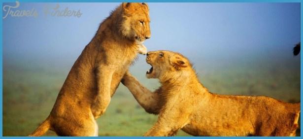 Kenya Luxury Wildlife Travel _18.jpg
