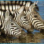 Kenya Luxury Wildlife Travel _3.jpg