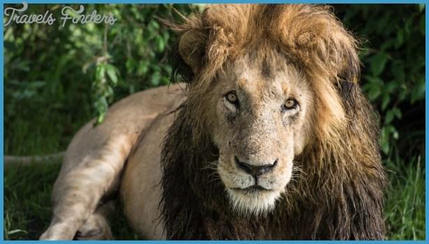 Kenya Luxury Wildlife Travel _5.jpg