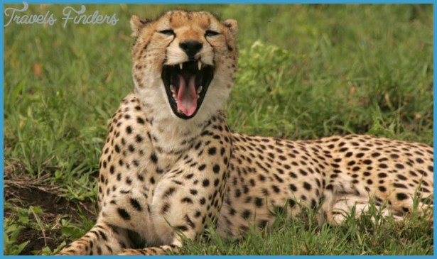 Kenya Luxury Wildlife Travel _7.jpg