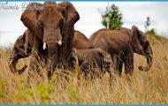 Kenya My Wildlife Travel Story _0.jpg