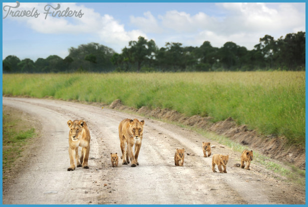 Kenya National Wildlife Travel _0.jpg