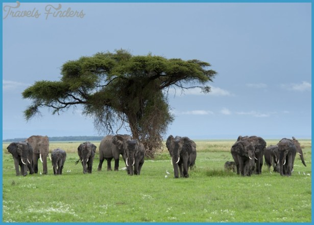 Kenya National Wildlife Travel _10.jpg