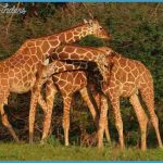 Kenya National Wildlife Travel _2.jpg