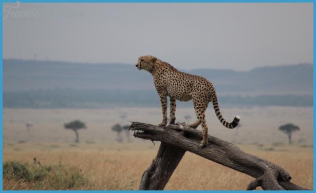 Kenya National Wildlife Travel _4.jpg