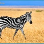 Kenya National Wildlife Travel _6.jpg