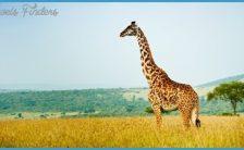 Kenya Wildlife Nature Travel_2.jpg