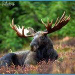 Norway Wildlife Travel_3.jpg