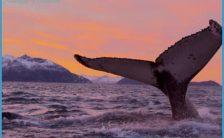 Norway Wildlife Travel_5.jpg