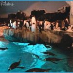 SeaWorld Orlando Exhibits Fun Facts!_0.jpg