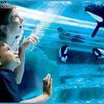 SeaWorld Orlando Exhibits Fun Facts!_12.jpg