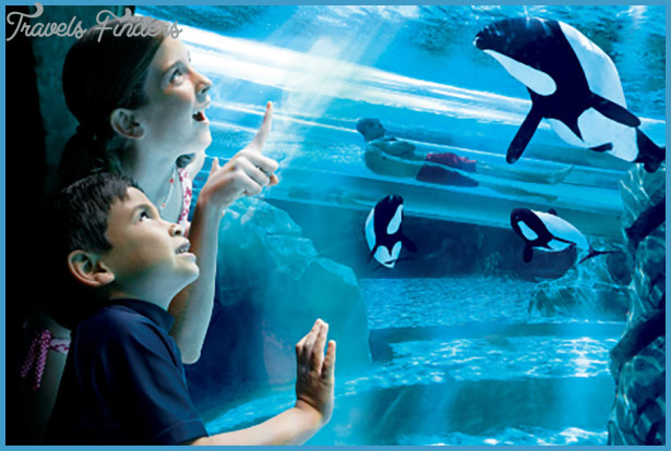 SeaWorld Orlando Exhibits Fun Facts!_12.jpg