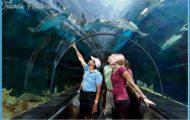 SeaWorld Orlando Exhibits Fun Facts!_13.jpg
