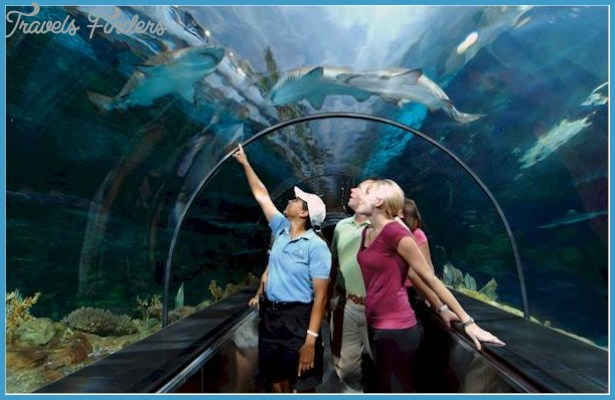 SeaWorld Orlando Exhibits Fun Facts!_13.jpg