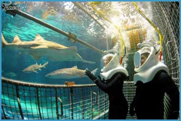 SeaWorld Orlando Exhibits_8.jpg