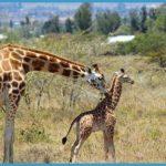 Wildlife International Travel _0.jpg