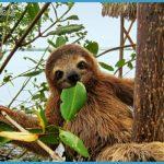 Wildlife International Travel _1.jpg