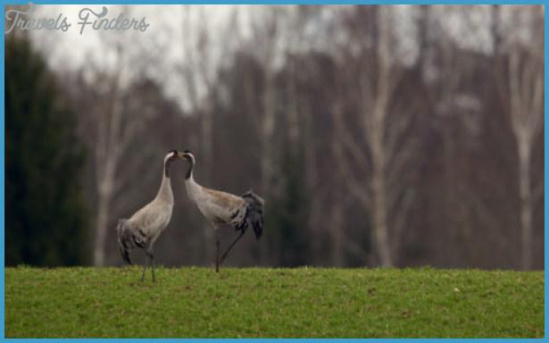 Wildlife International Travel _3.jpg