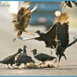 Wildlife International Travel _5.jpg