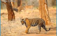 Wildlife International Travel _6.jpg