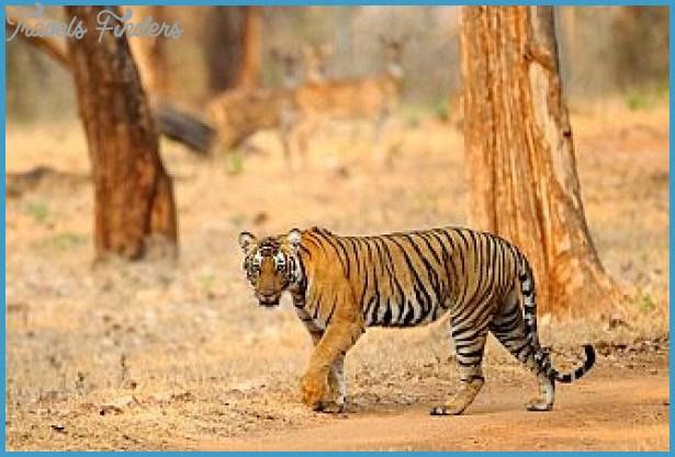 Wildlife International Travel _6.jpg
