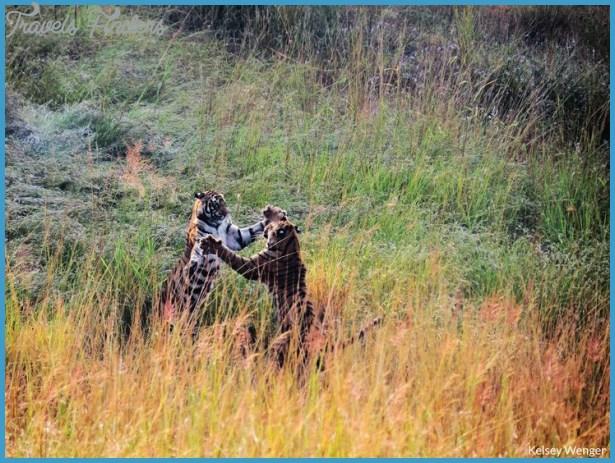 Wildlife Nature Travel _0.jpg