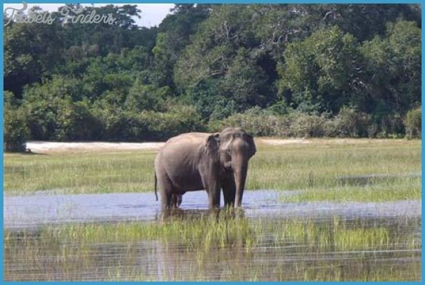 Wildlife Nature Travel _12.jpg