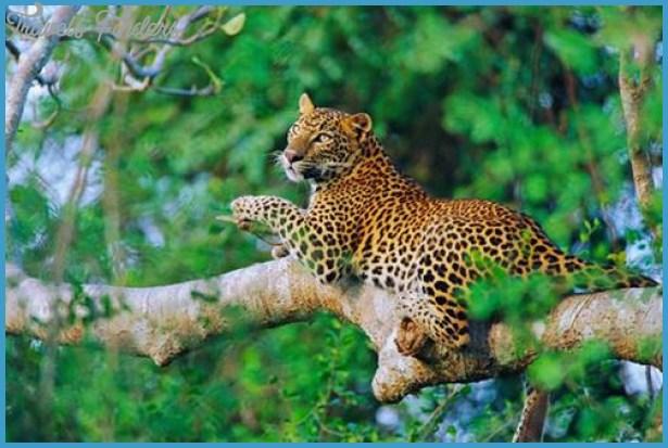 Wildlife Nature Travel _24.jpg