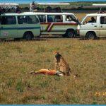 Wildlife Photo Travel _8.jpg