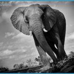 Wildlife Photography Travel _11.jpg