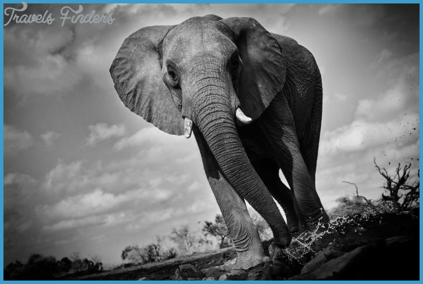 wildlife photography travel  11 Wildlife Photography Travel