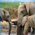 Wildlife Photography Travel _15.jpg