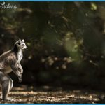 Wildlife Photography Travel _17.jpg