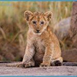 Wildlife Photography Travel _18.jpg