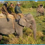 Wildlife Travel Packages_11.jpg