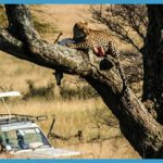 Wildlife Travel Packages_14.jpg