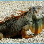 Wildlife Travel To Florida_8.jpg
