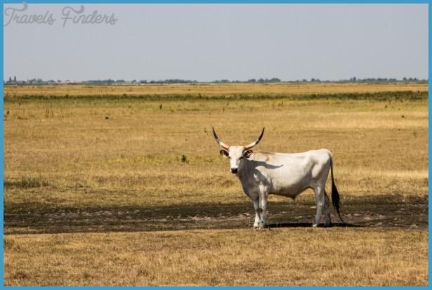 Wildlife Travel To Hortobagy_10.jpg
